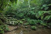 Rainforest stream with lush vegetation, Japan