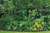 Rainforest vegetation, island of St. Croix, U.S. Virgin Islands, USA