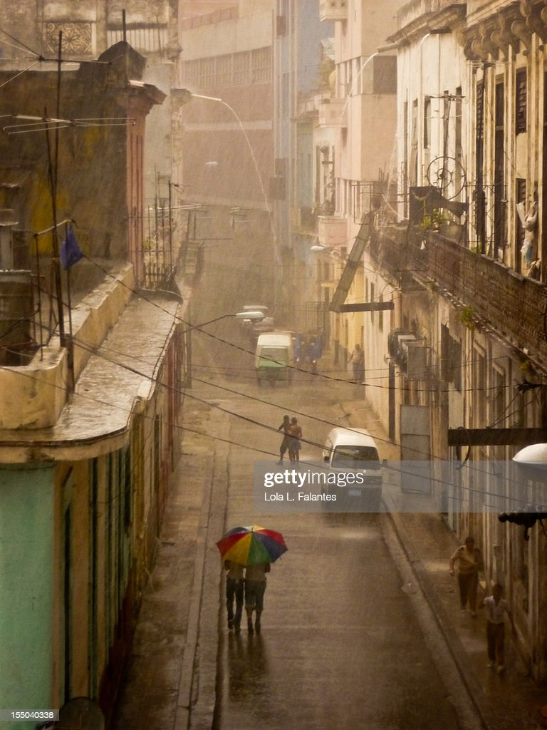 Raining cats and dogs : Stock Photo