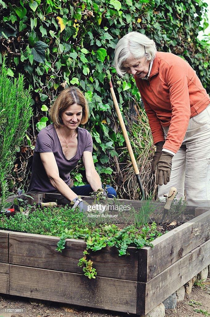 Raised Bed Gardening : Stock Photo