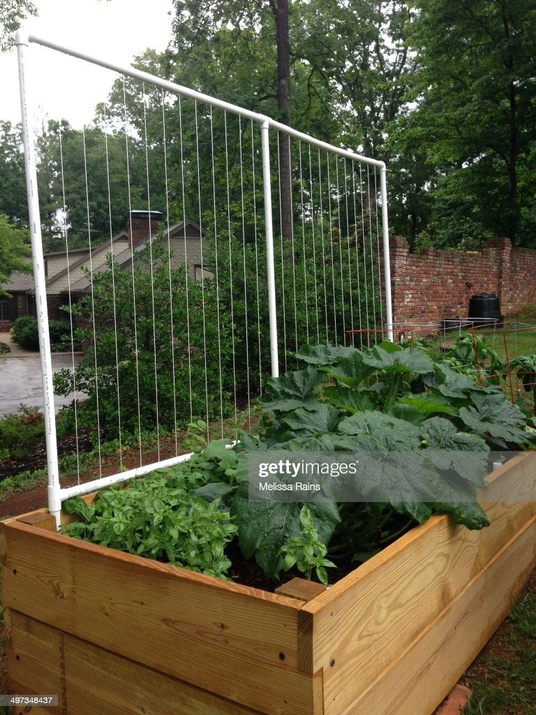 Raised Garden Bed With A PVC Bean Trellis. Compost Bin In Background.