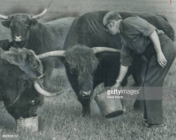 Raising highland and cattle is a hobby for Brampton veterinarian Dr Jerry Kirk but it's starting to pay off He started with a cow in 1960 and now has...