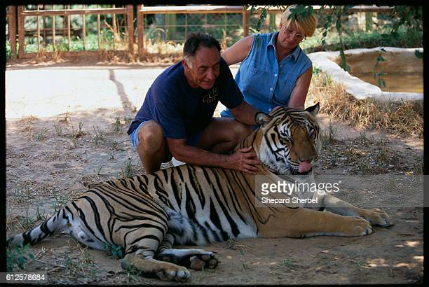 Raja a 17yearold Bengal tiger with Gene and Robert von Reitnauer of the Texas Exotic Feline Foundation