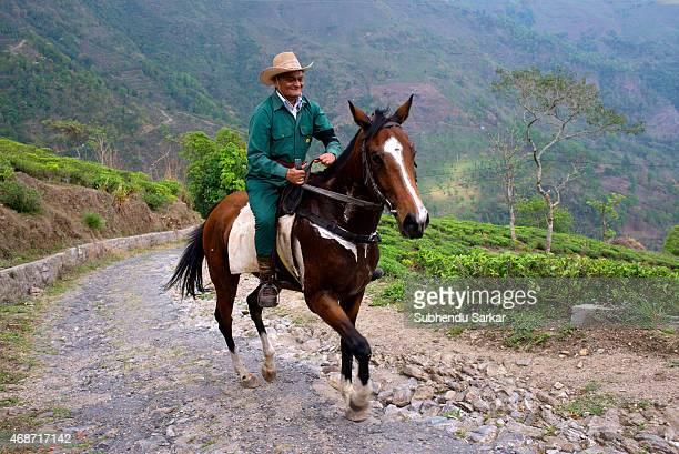 Rajah Banerjee rides a horse to survey work at the Makaibari tea estate Set up in 1859 off Kurseong in the Darjeeling hills the Makaibari estate is...