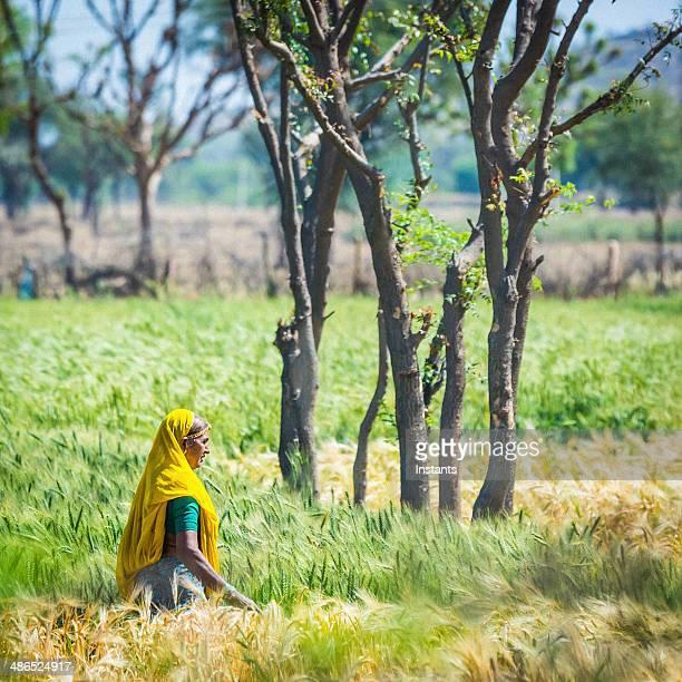 Rajasthan Fields