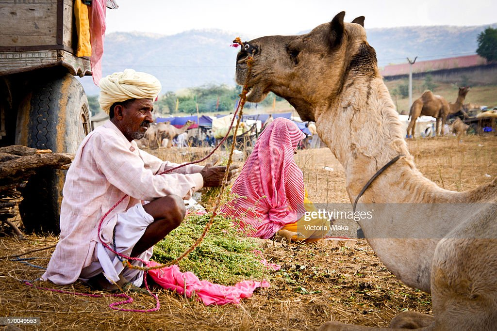 CONTENT] Rajasthani camel trader dressed in Pink hanging out with his camel at the Pushkar Camel Fair in November 2010