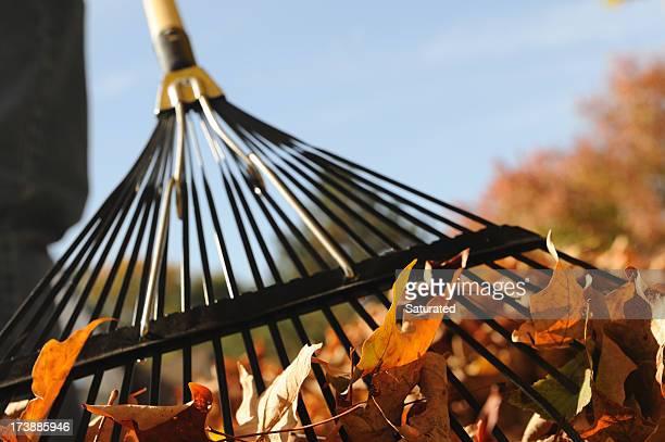 Cumuler feuilles sur une belle journée d'automne