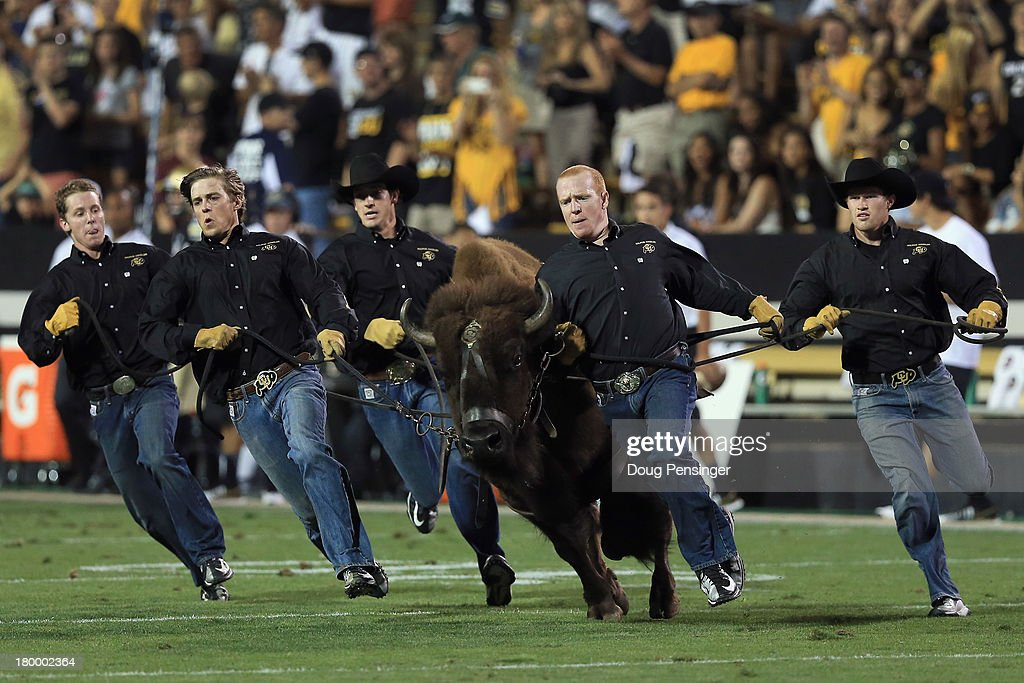 Ralphie VI the mascot of the Colorado Buffaloes takes the field at halftime against the Central Arkansas Bears at Folsom Field on September 7, 2013 in Boulder, Colorado. Ralphie VI failed to make her pregame appearance as the Buffaloes defeated the Bears 38-24.