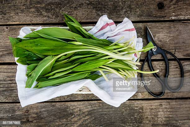 Ramson on kitchen towel and scissors on wood