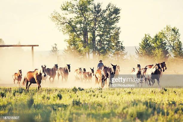 Rancher 車で馬でモンタナランチ