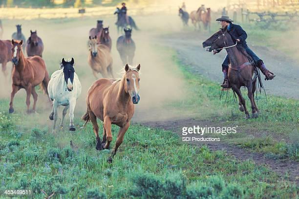 Ranchers conduite chevaux en champ de de corral