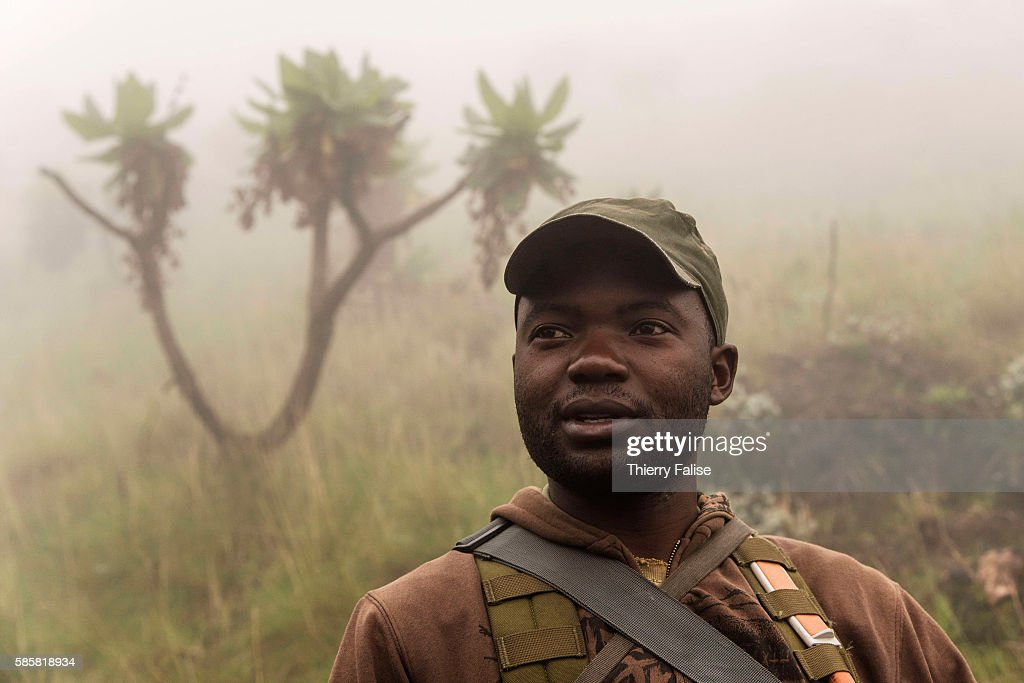 A ranger in the morning mist walks down Mount Nyiragongo The Nyiragongo is an active stratovolcano with an elevation of 3470 metres in the Virunga...