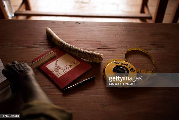 A ranger of the Zakouma National Park waits to take notes on dozens of elephant tusks piled at the main office on February 20 2014 waiting for an...