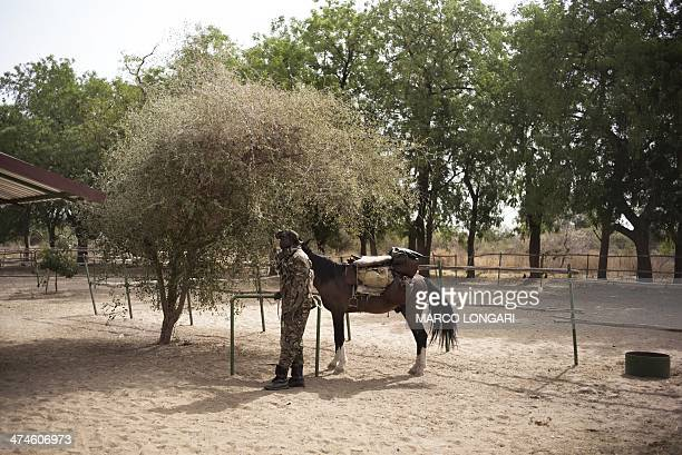 A ranger waits in the shade with his horse at the Zakouma National Park in Chad as he departs for a patrol on February 24 2014 Rangers are of vital...