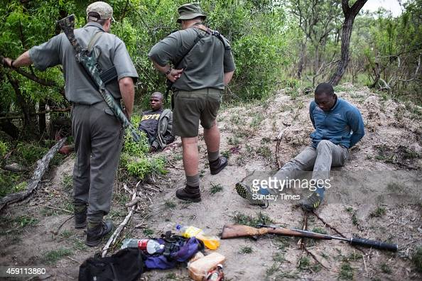 Rangers Rob Thompson and Don English with suspected rhino poachers on November 7 2014 at the Kruger National Park South Africa The suspected rhino...