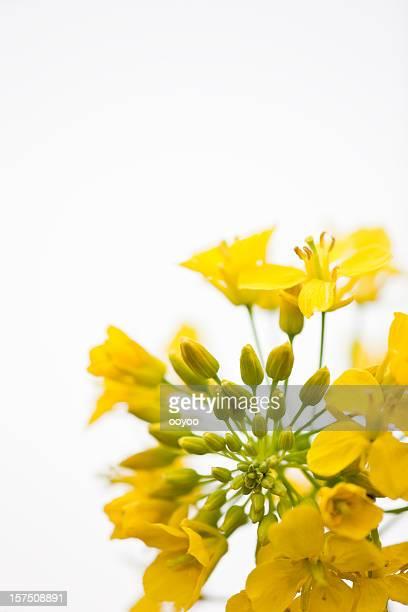 Estupro Flores