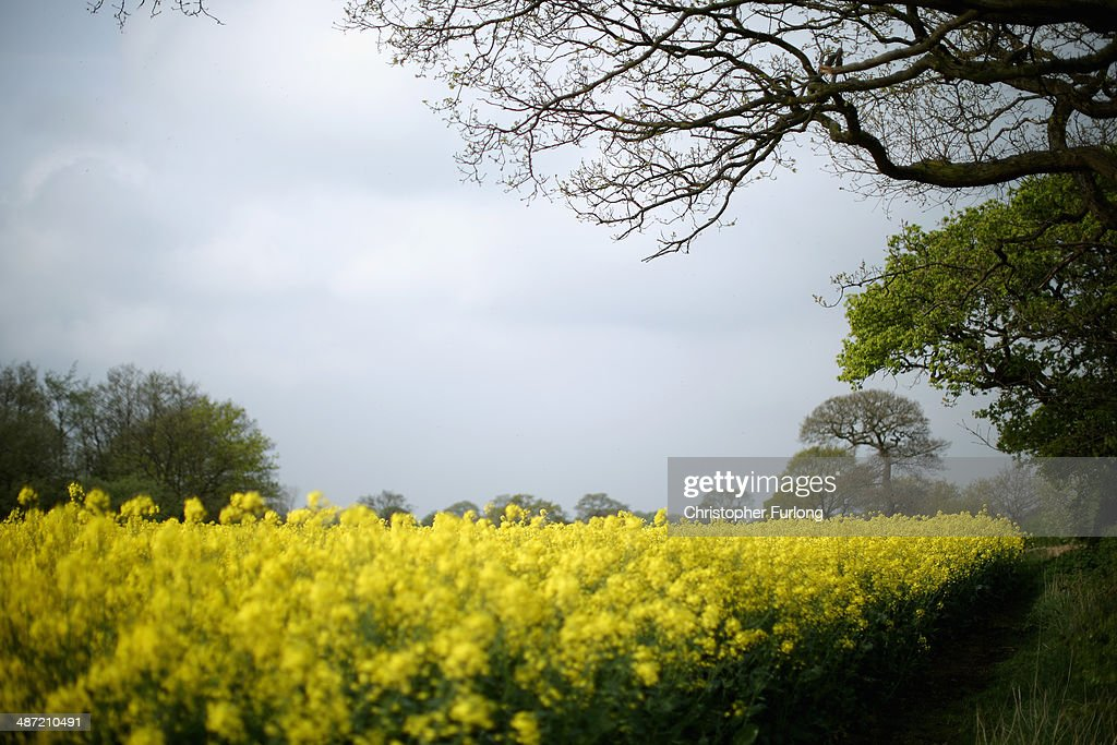 Rapeseed and a farm gate mark the point where the proposed route of the new HS2 high speed rail link will pass through near to the village of Pickmere on April 28, 2014 in Knutsford, United Kingdom. The House of Commons will vote later today on the HS2 bill's second reading with 30 Conservative MPs threatening to vote against the Government's pro-HS2 stance.