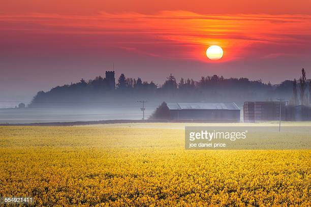 Rapeseed sunrise, Belmont Abbey, Hereford, England