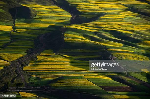 Rapeseed & wheat field