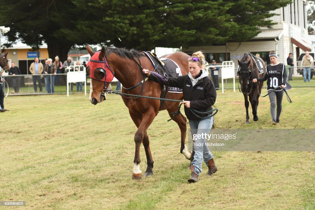 Rapid Action parades before the Bet365 Maiden Plate at Coleraine Racecourse on August 12, 2017 in Coleraine, Australia.