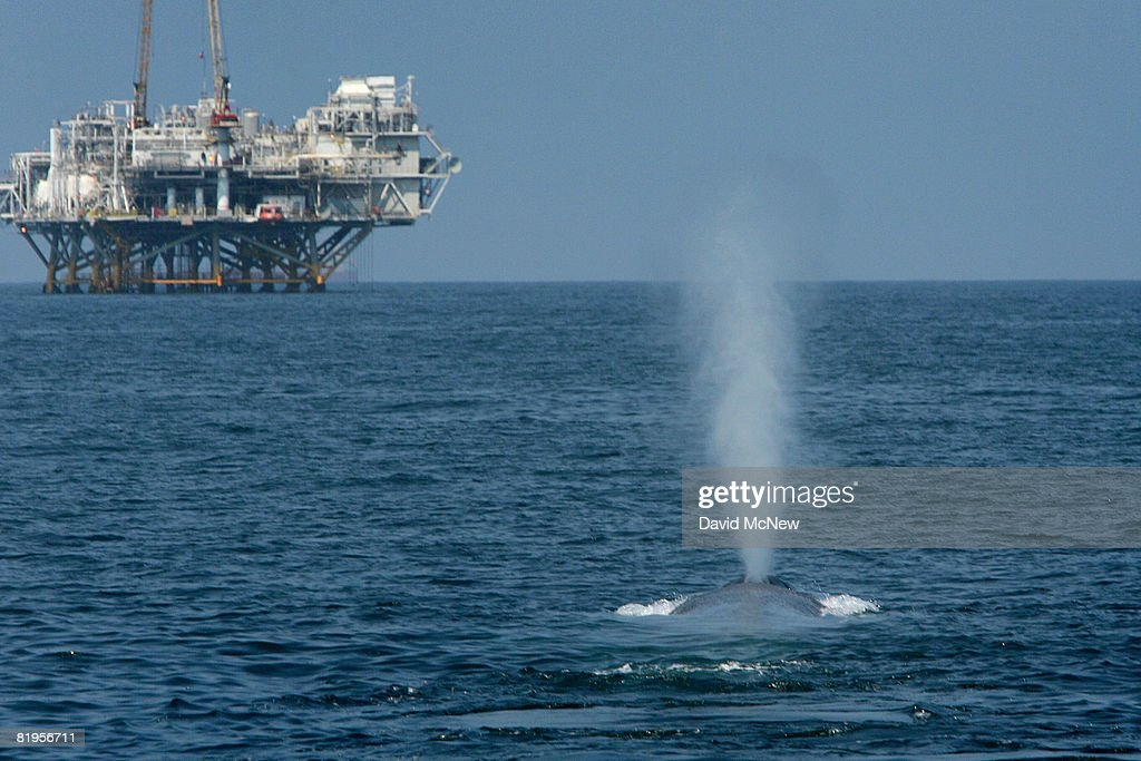 the controversial issue of whaling and the whale industry Japan ended its annual antarctic whale hunt weeks early after one of its ships was obstructed by sea shepherd, an anti-whaling  migration so controversial.