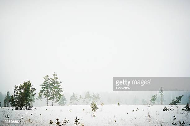 Rare trees under heavy snow storm in russian wilderness