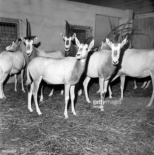 Rarest animals in the Salford quarantine zoo January 1971 7100145001