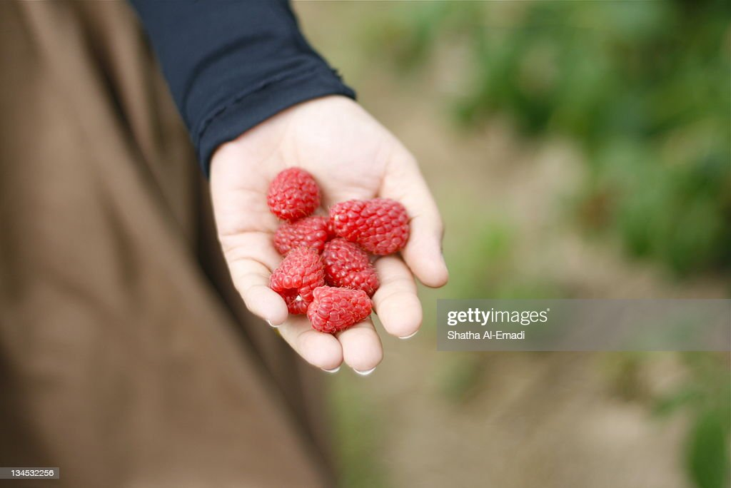 Raspberry : Stock Photo