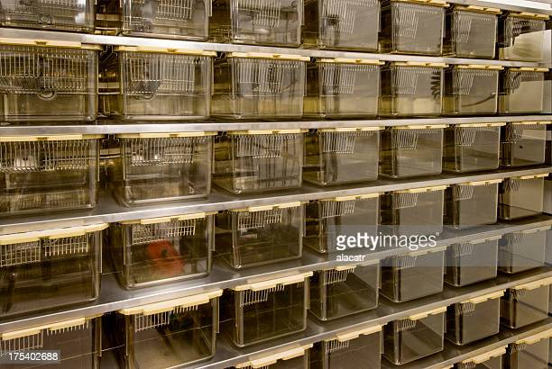 Rat Cages for Animal Research