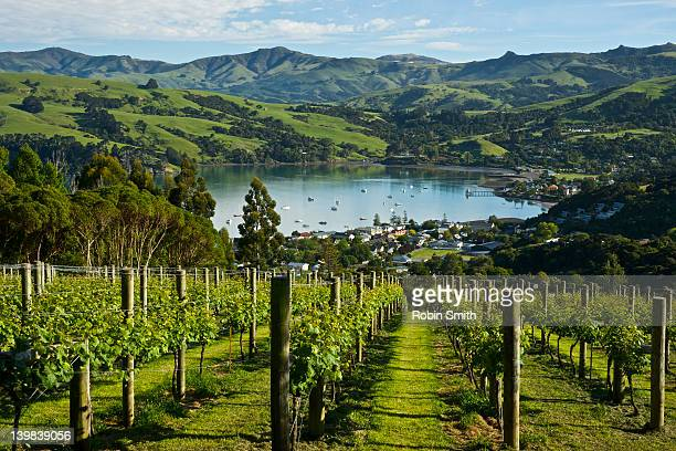 Rata vineyard & view of Akaroa town, Akaroa, Banks Peninsula, South Island, New Zealand