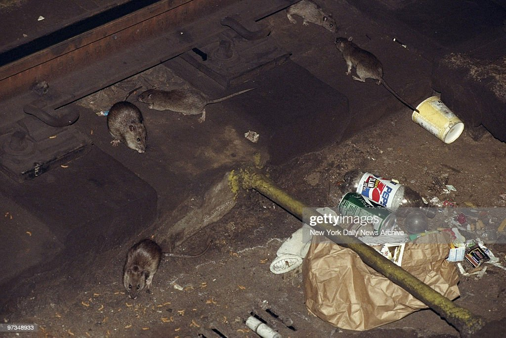 Rats on the subway tracks at the 53rd St station