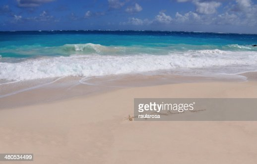 Raul on sand : Stock Photo