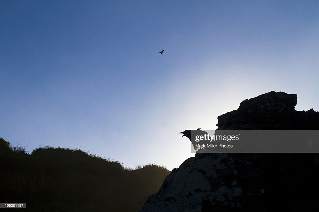 Raven Calls to Partner High Above in Sky : Stock Photo