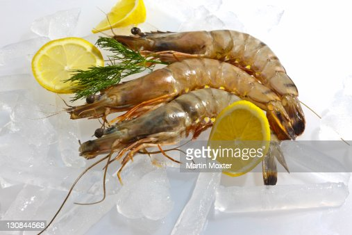 Raw Black Tiger Prawn (Penaeus monodon), shrimp with lemon, salad and dill on ice, ready for preparation
