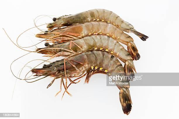 Raw Black Tiger Prawns (Penaeus monodon), shrimp ready for preparation