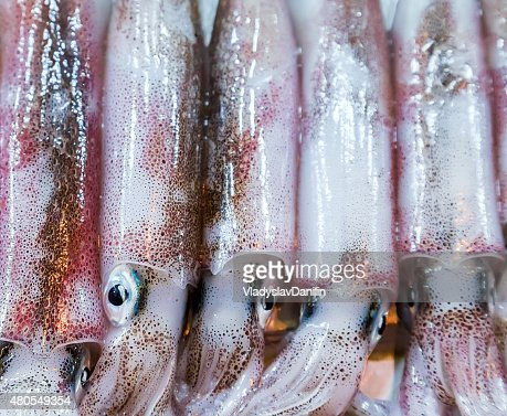 raw calamari : Stock Photo