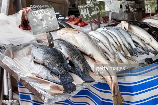 Peixe cru no gelo em fishmonger de Laje