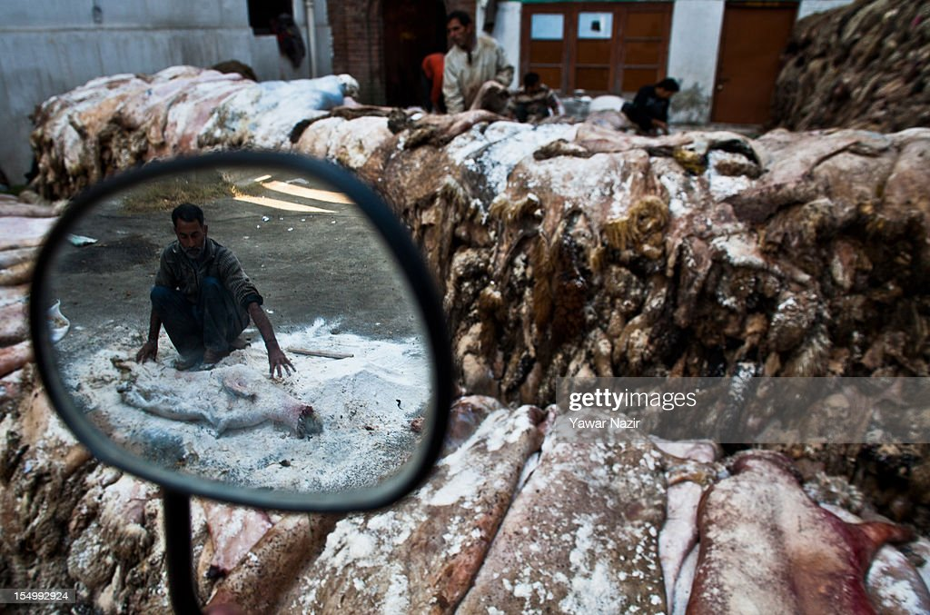 Raw hide and skin workers apply salt to sheep and goat hide on October 30, 2012 in Srinagar, the summer capital of Indian administered Kashmir, India. Muslim countries produce the highest number of raw hides during the Eid ul Adha (Feast of the Sacrifice). With the Sacrificing of animals on the eve of Eid, millions of raw hides, mostly from sheep, goat and other bovine animals are prepared. The trade generates billions of dollars drives the raw material need of the footwear industry, where most of the hides are utilized after tanning. The State of Jammu and Kashmir, a Muslim majority state, also produces three million hides from different animals annually, with some two hundred thousand hides made ready on Eid. The hides are mostly exported in raw form to India based tanneries which process it to leather that is mostly exported to Europe.