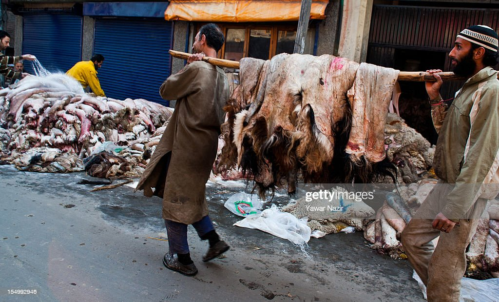 Raw hide and skin workers collect sheep and goat hides on October 30, 2012 in Srinagar, the summer capital of Indian administered Kashmir, India. Muslim countries produce the highest number of raw hides during the Eid ul Adha (Feast of the Sacrifice). With the Sacrificing of animals on the eve of Eid, millions of raw hides, mostly from sheep, goat and other bovine animals are prepared. The trade generates billions of dollars drives the raw material need of the footwear industry, where most of the hides are utilized after tanning. The State of Jammu and Kashmir, a Muslim majority state, also produces three million hides from different animals annually, with some two hundred thousand hides made ready on Eid. The hides are mostly exported in raw form to India based tanneries which process it to leather that is mostly exported to Europe.