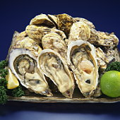 Raw oyster in shells