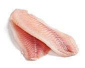 raw filleted tilapia on white background