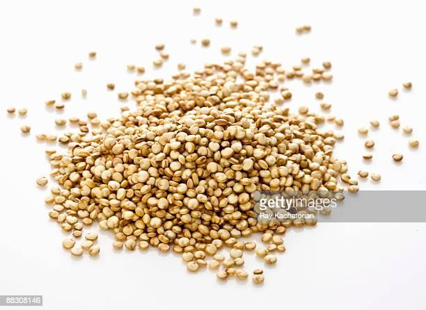 Raw quinoa grain