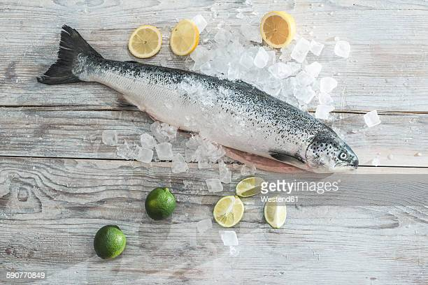 Raw salmon with ice, lime and lemons