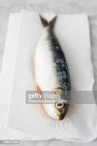Raw sardine : Stock Photo