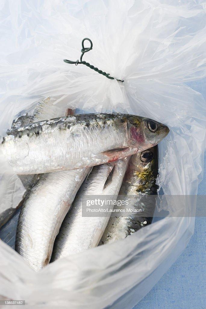 Raw sardines in plastic bag : Stock Photo
