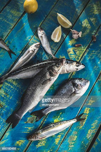 Raw sea bream, sea bass, sardines and mackerel fish on a wooden table with lemon and garlic