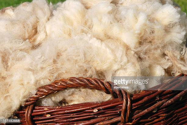 raw sheep wool