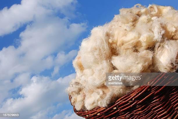 raw sheep wool