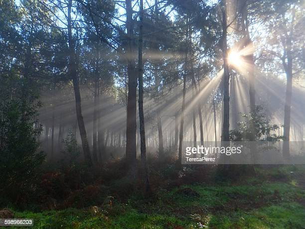 Rays and colorful in the forest
