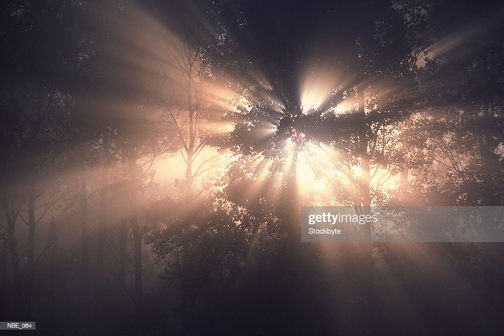Rays of sun in forest : Stock Photo